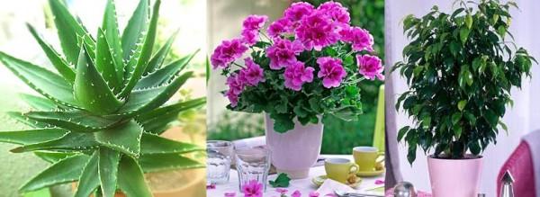 Комнатных растения которые должны