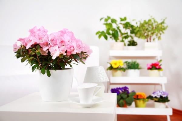 Советы астрологов: Когда лучше покупать растения