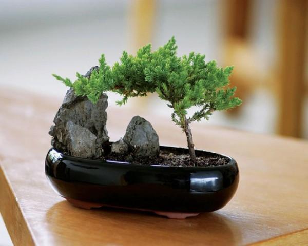 Деревья из мха своими руками мастер класс