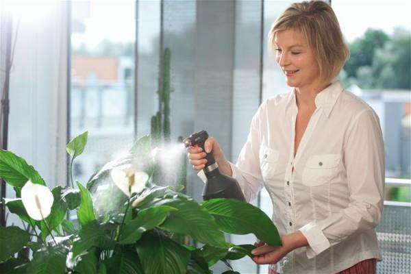 Открывая окна в мороз, убирай комнатные растения с подоконника! Они могут пострадать от холода, а кроме того, проветривание никак не заменяет опрыскивание. Морозный воздух не менее сухой, чем воздух в отапливаемом помещении