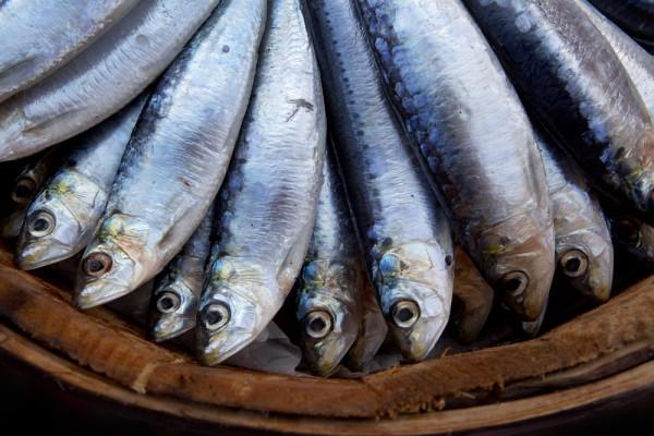 Омега-3 можно получить также из других сортов рыбы, такой как сельдь, сардины, форель, скумбрия.