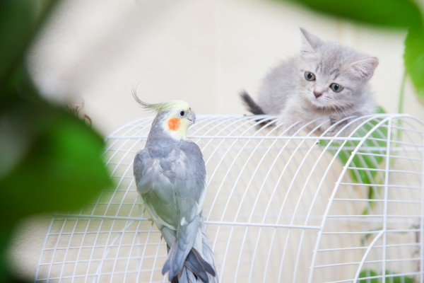 Птицы подходят для квартиры