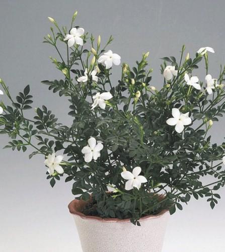 Какое комнатное растение