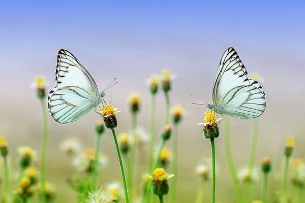 Обеспечь бабочкам места отдыха на солнце