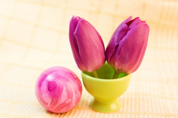 """Из двух тюльпанов получились симпатичные """"ушки"""" пасхального кролика."""