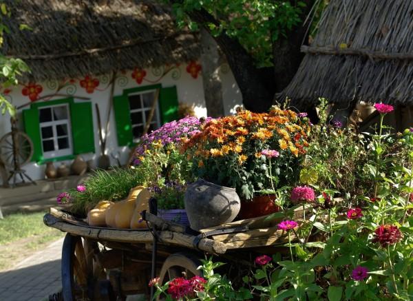 Как посадить клумбу на даче