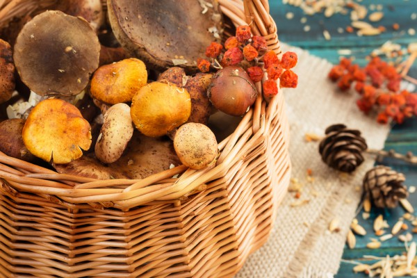В високосный год народные приметы запрещают сбор грибов