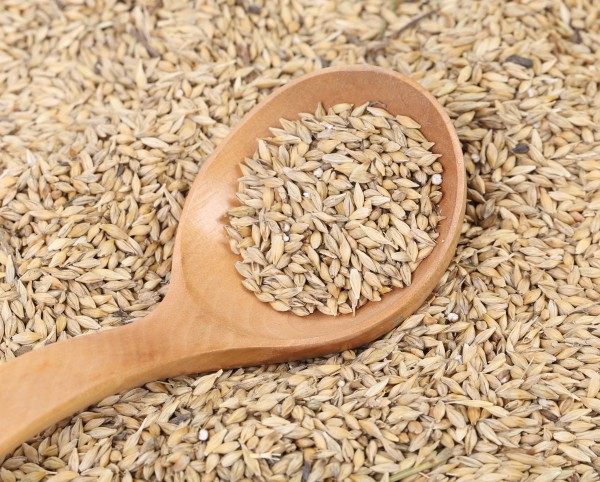 Для приготовления белого кваса выбирают светлый пшеничный солод и муку