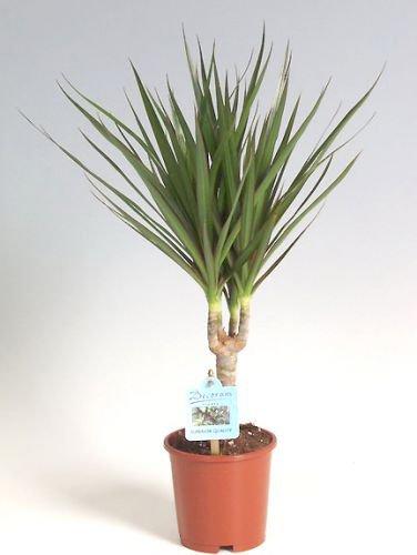Топ 10 комнатных растений для лентяйки