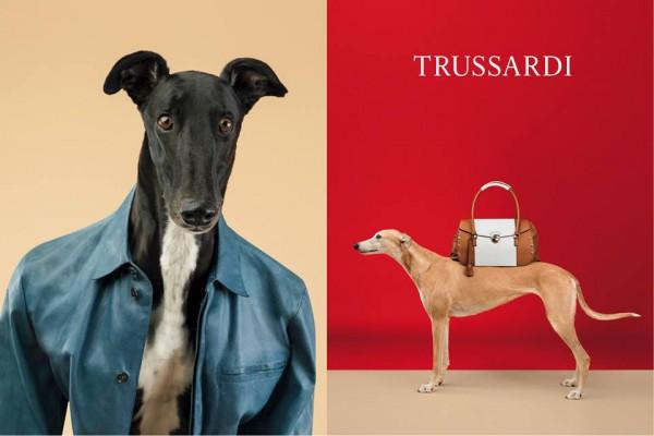 Английская борзая примерила самые знаковые вещи из коллекции весна-лето 2014 бренда Trussardi