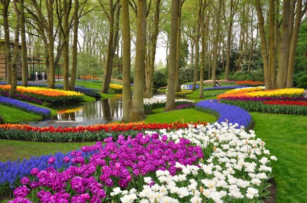 Тюльпановый рай в Кропивницком фото