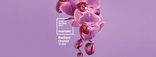 Сияющая Орхидея - главный цвет 2014 года