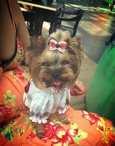 Слава надела на свою собаку вышиванку / instagram.com/babaslavka