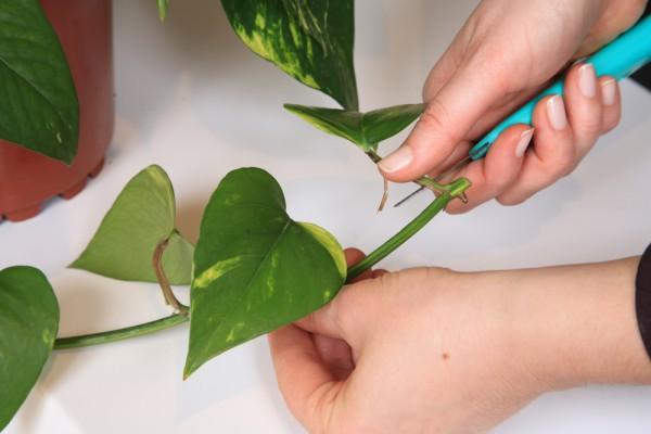 Инструкция По Уходу За Комнатными Растениями