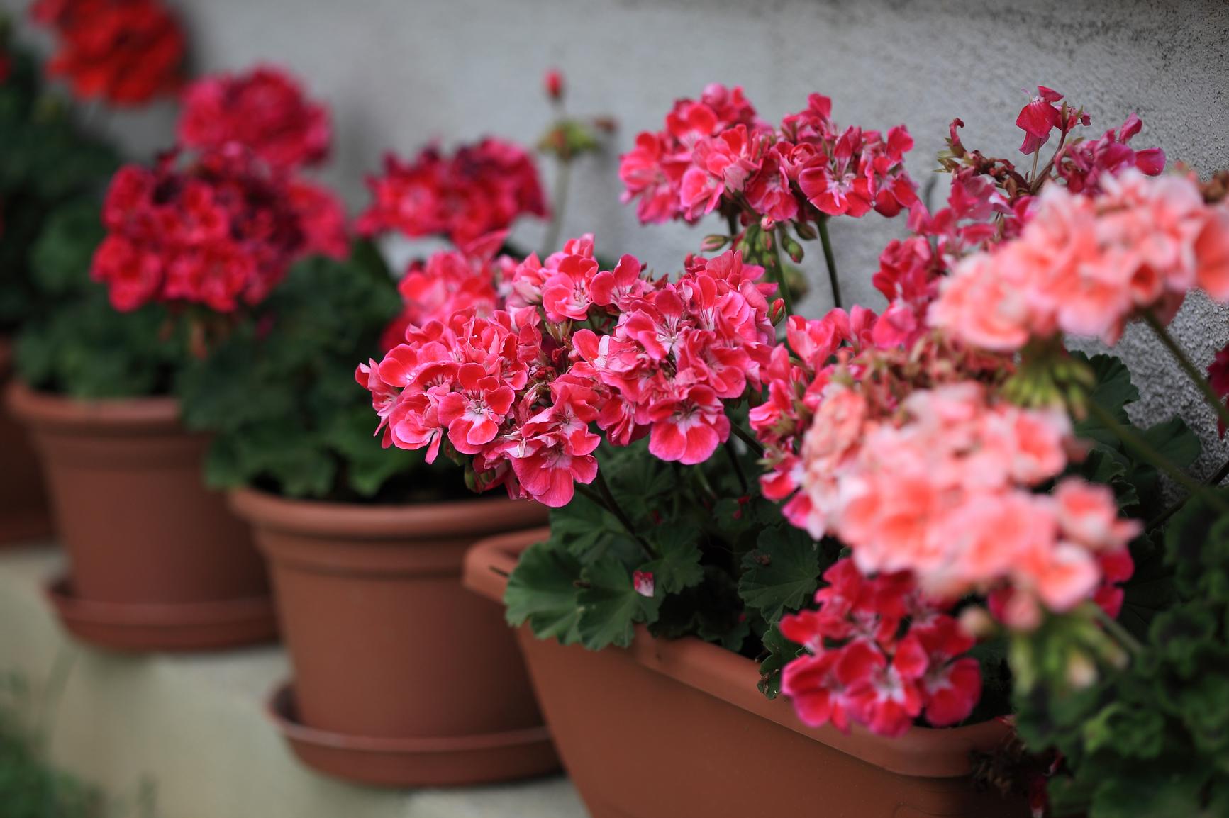 Цветы комнатные на зиму отмирает