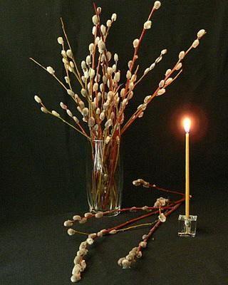 Вербное Воскресенье 2020: Традиции и приметы праздника