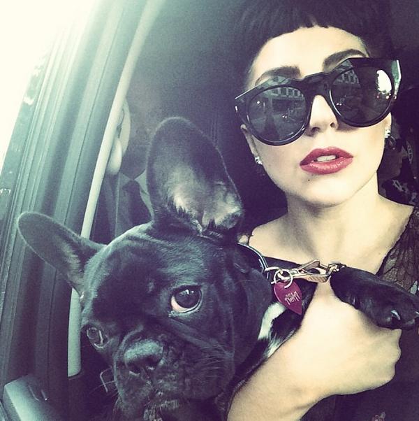 Певица Lady Gaga со своей любимицей Эйшей Кинни