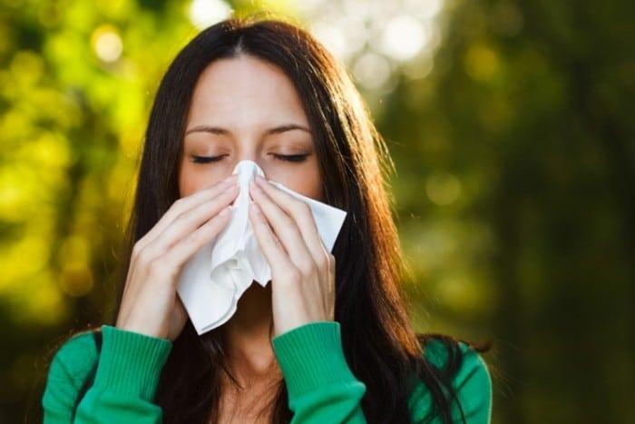 Аллергия на амброзию: что следует знать
