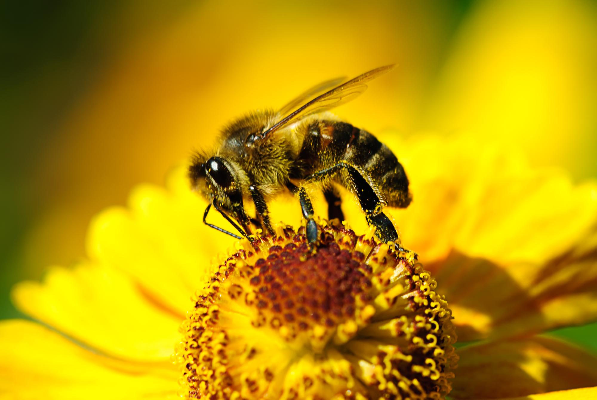 Запреты дня на 2 июля 2020: Чего категорически нельзя делать на Зосиму Пчельника
