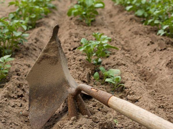 Садовые роботы в июне: что нужно успеть сделать