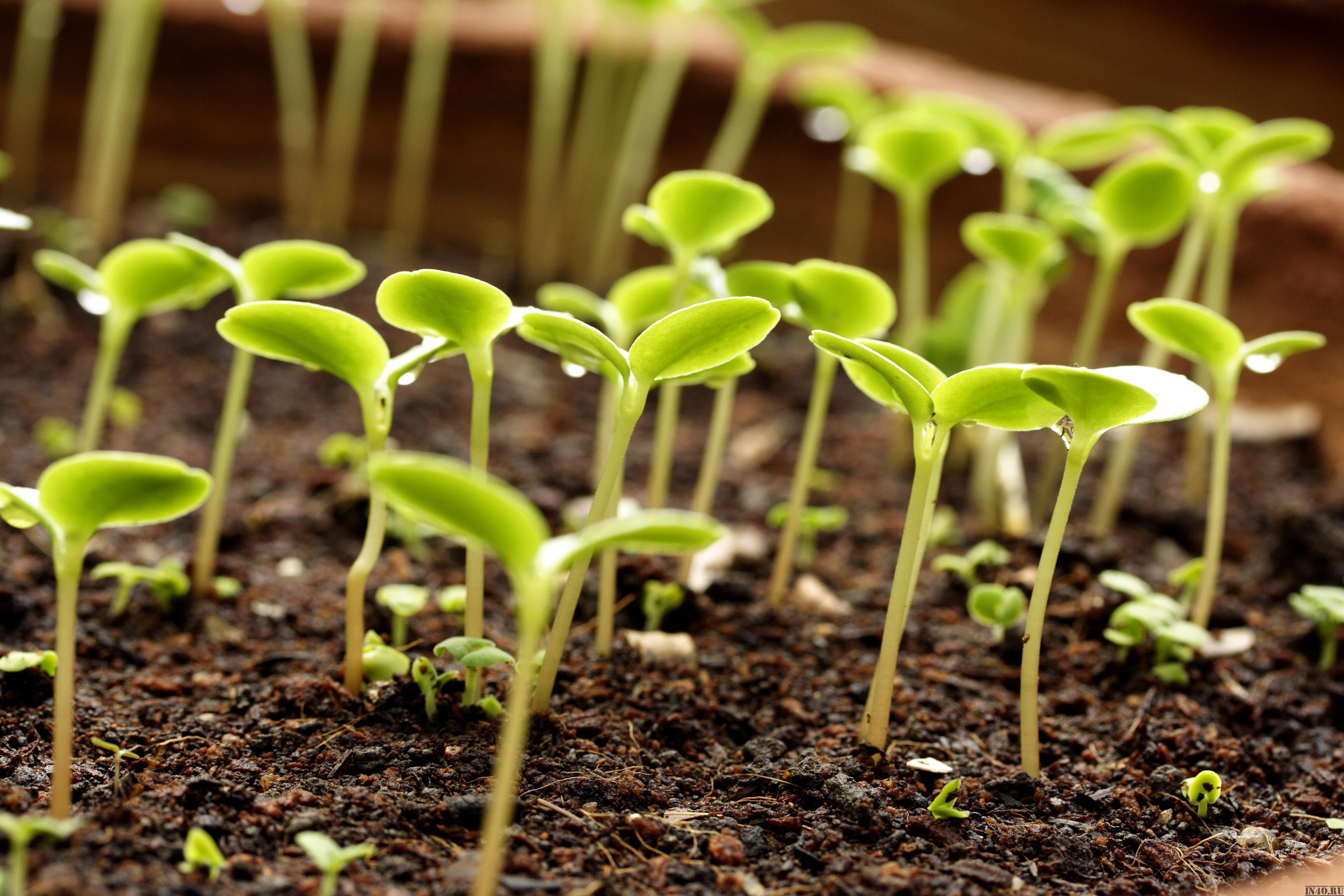 Какие цветы можно посадить в августе на даче семенами