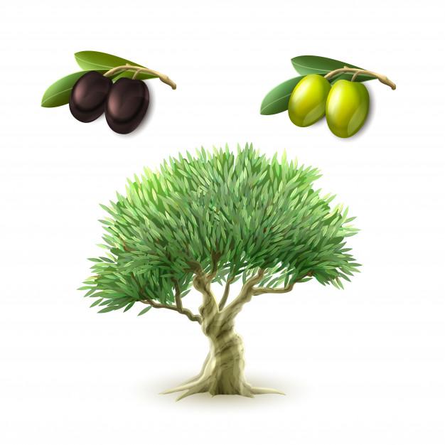 4 полезных свойства оливок, о которых вы не знали