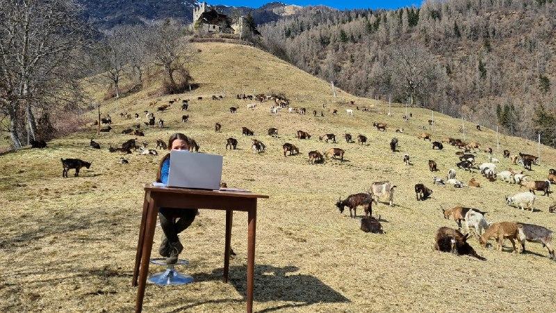 10-летняя итальянка посещает онлайн-уроки в окружении стада коз