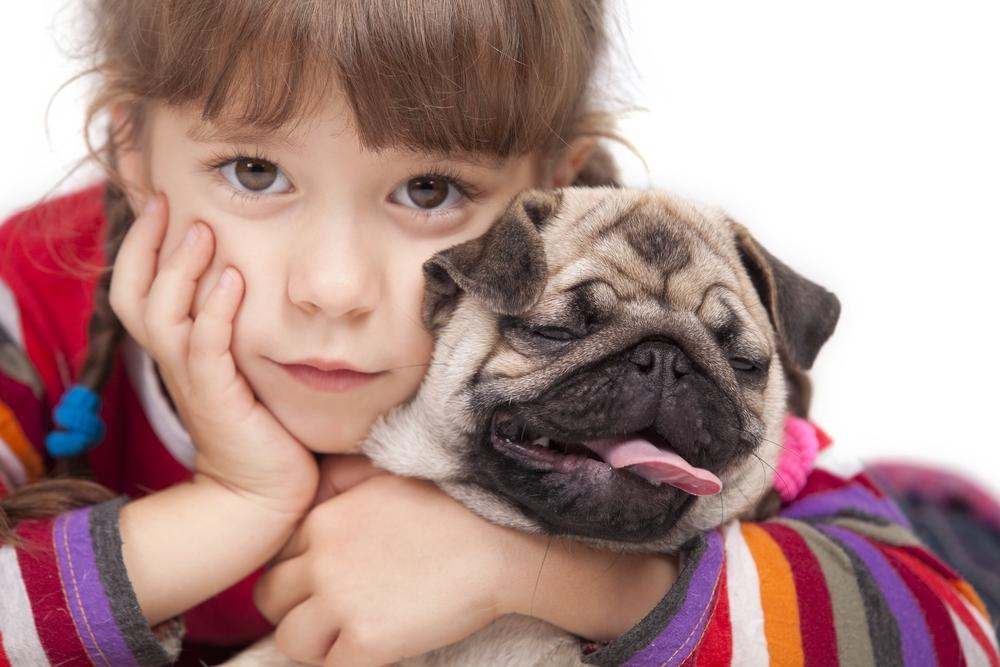Как сбросить лишний вес у собаки