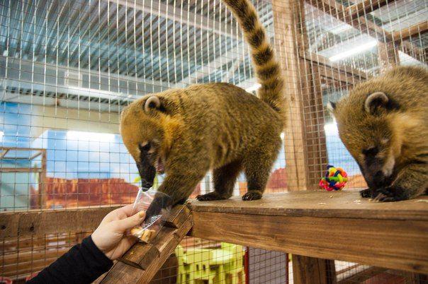 Ульяна Супрун рассказала, почему не стоит ходить в контактные зоопарки