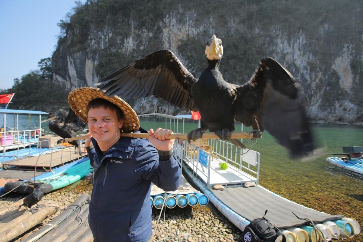 Китайцы добывают улов при помощи бакланов: Комаров отправится на экзотическую рыбалку