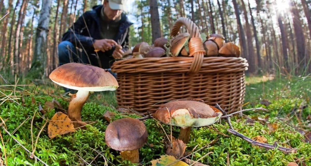 Как не отравиться грибами летом