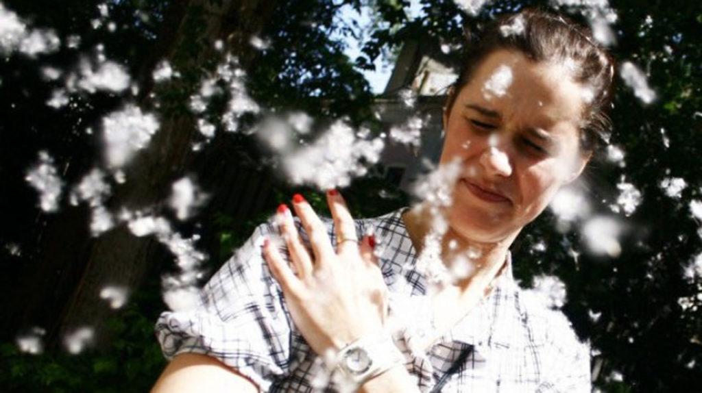 Тополиный пух: как справиться с аллергией