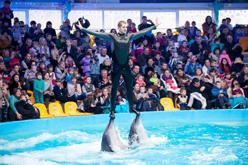Куда пойти с ребенком: Дельфинарий