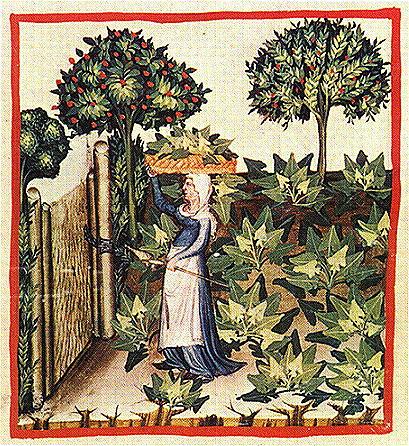 Средневековый сбор шпината