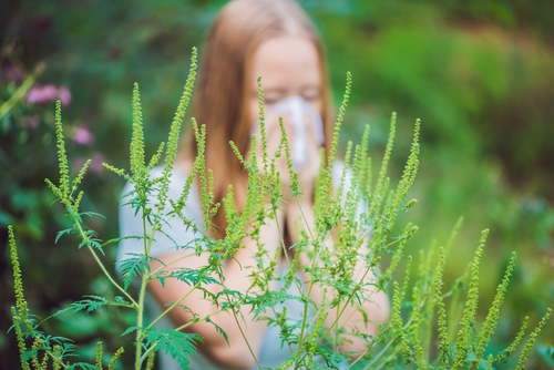 Тополиный пух, жара, июнь: почему возникает аллергия?