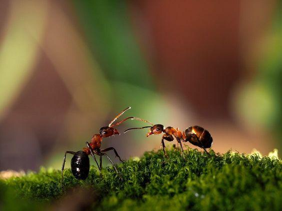 Самые опасные летние насекомые: Муравьи