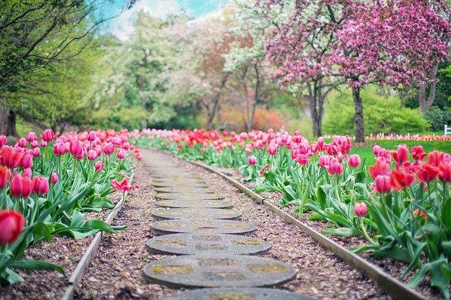 Что высаживать в открытый грунт в мае?