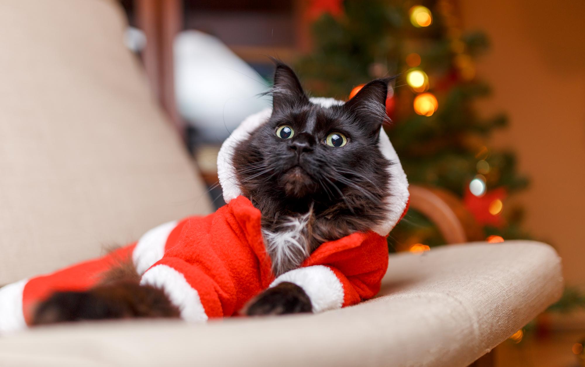 Британцы составили рейтинг самых раздражающих рождественских песен