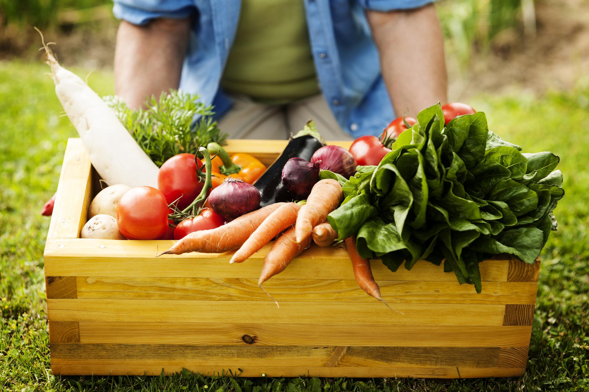 Диетолог объяснила, почему овощи нужно есть каждый день