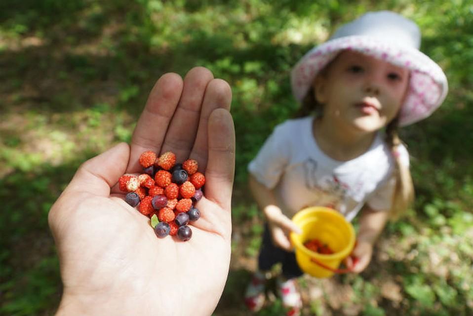 Поход в лес за ягодами однозначно понравится вашему малышу