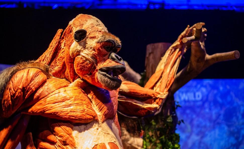 Выставка «Всесвіт тіла: Всередині тварин»