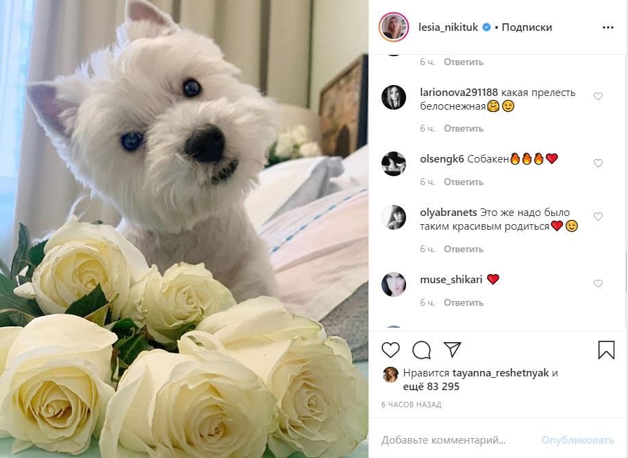Пупсик с розами: Никитюк очаровала Сеть домашним фото