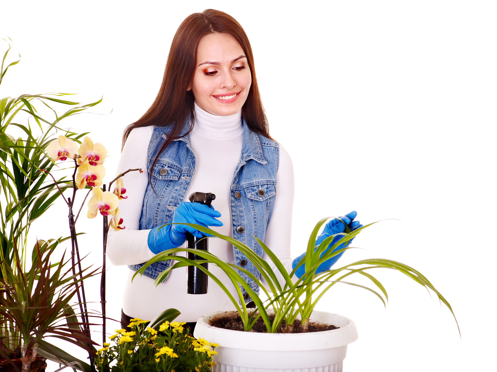 Каталог комнатных цветов, выращиваемых в домашних условиях, особенности