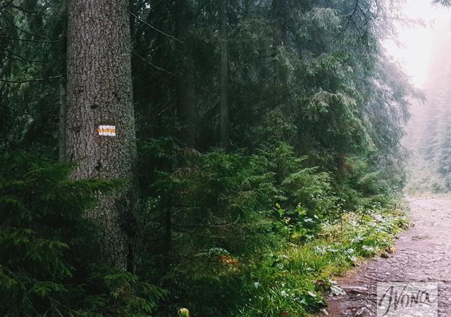 Желтая маркировка не даст потеряться в лесу