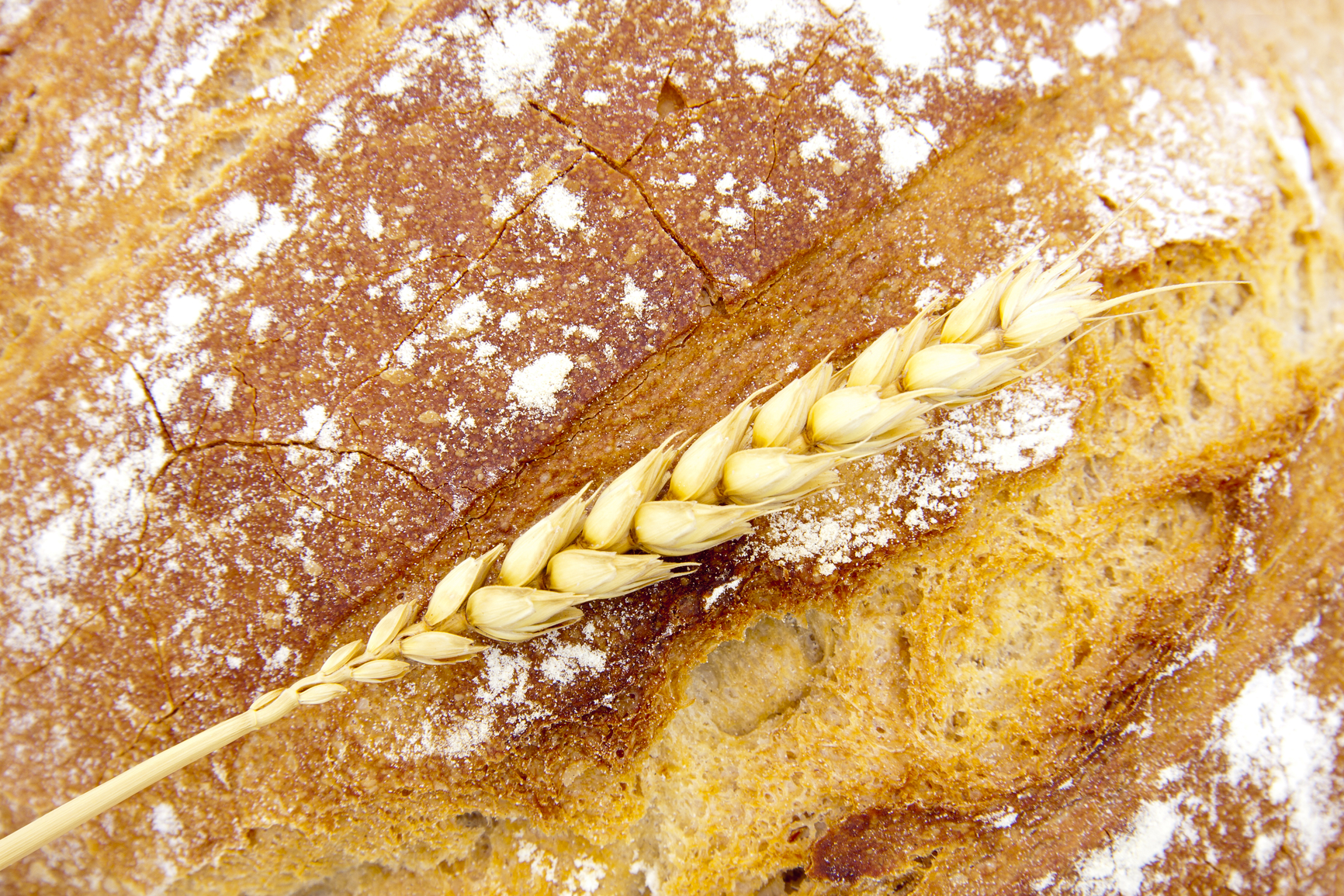 фото для быстрый хлеб хлебопечки
