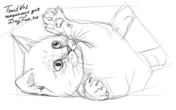Рисуем котенка