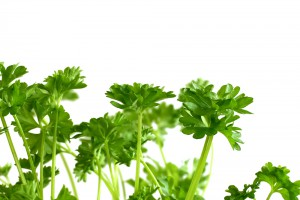 Первая весенняя зелень содержит массу витаминов