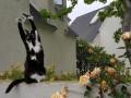 Лапы вверх: кошка Кис покорила соцсети странной привычкой