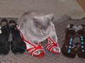 Отдай мне свои туфли: серия снимков о том, как коты любят обувь
