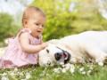 Пес учит малышку ползать